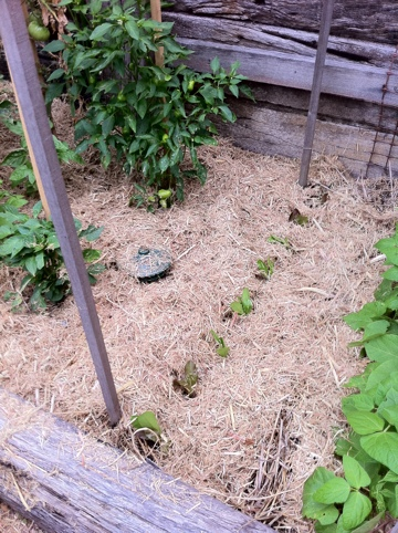 createyourgoodlife.com » Wrapping the garden up for summer ...