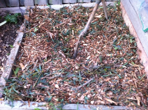 Cover with a good layer of mulch (3-5 inches).  Keep it away from the plant trunk.